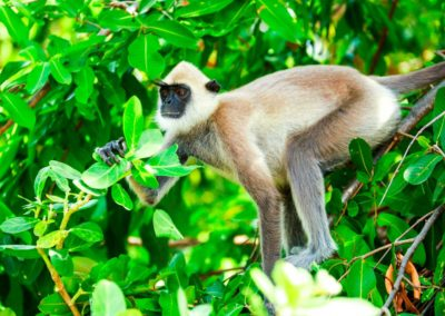 Animals-in-Arugam-9